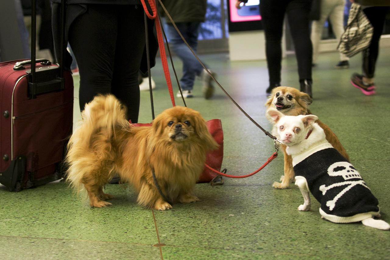 Tre hundar vid Liljeholmens T-bana