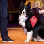 Othello, Årets Sociala Tjänstehund 2015