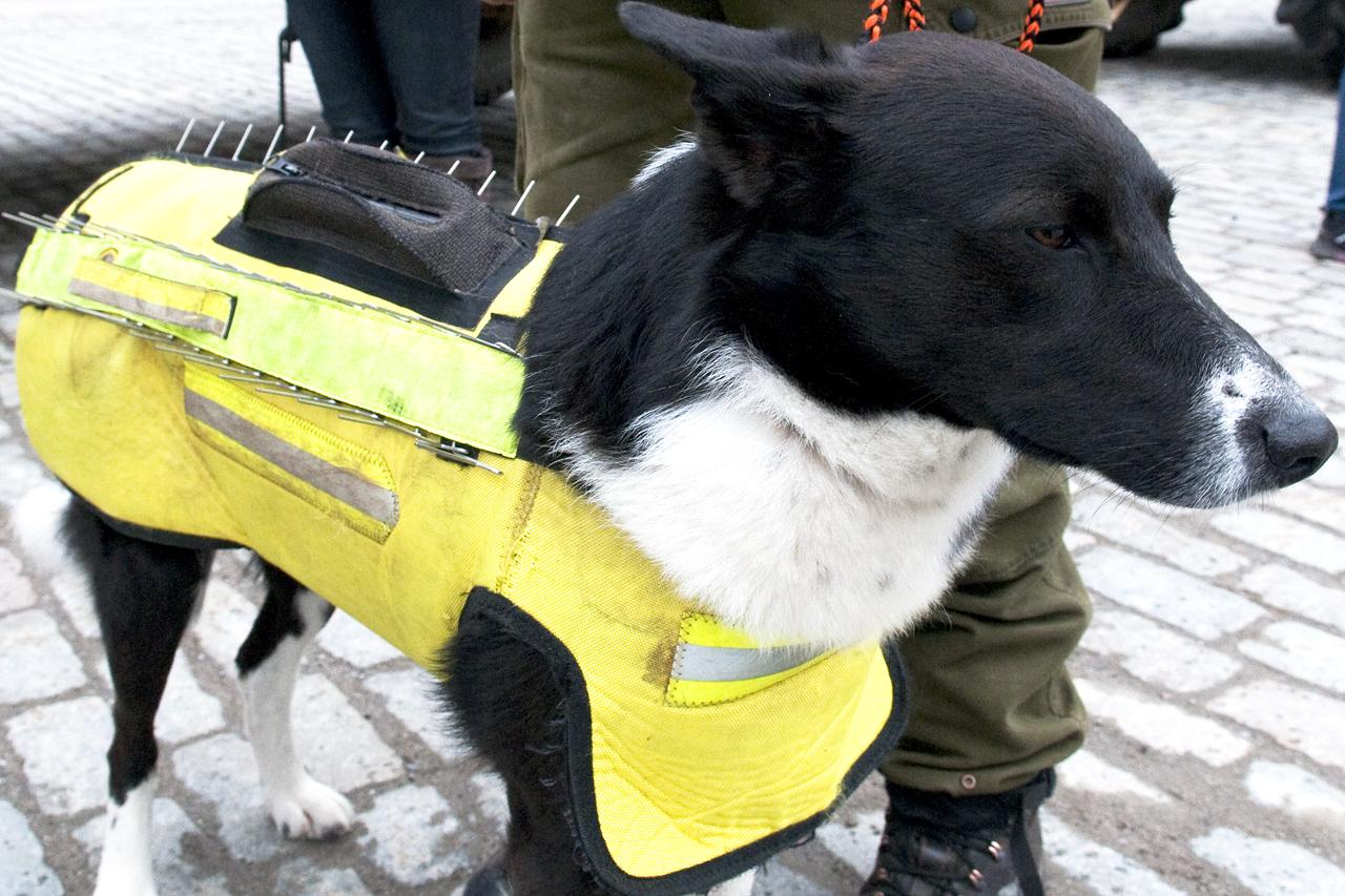 Skyddsväst för jakthund