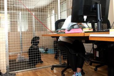 Hunden välkommen att hänga med på kontoret