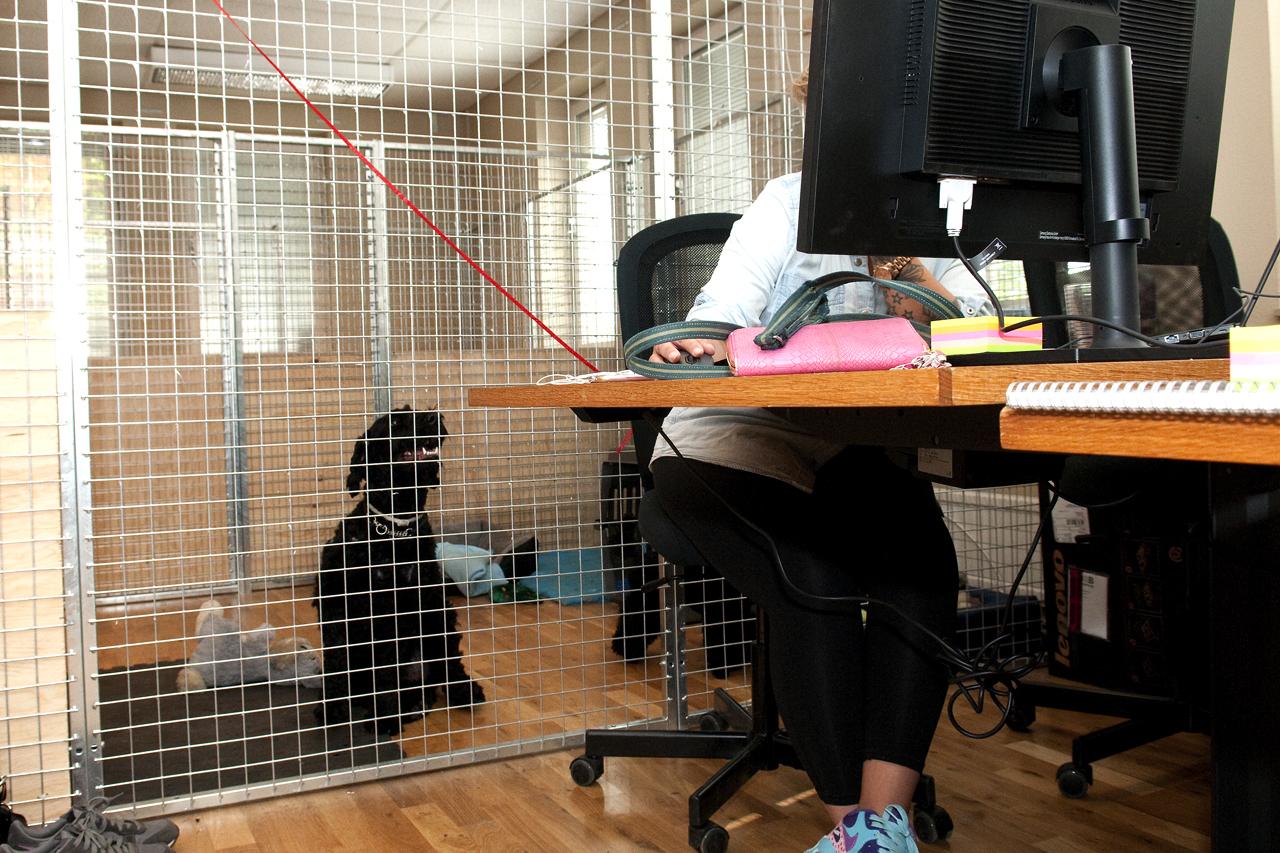 Hundkontor