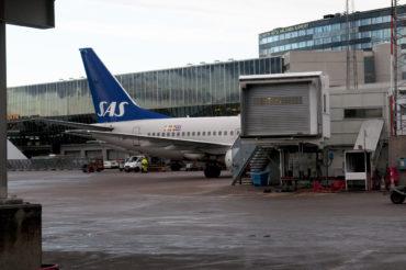 Hundarna Marley och Lara flyger med SAS till Kiruna