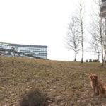 hundpromenad Arlanda flygplats
