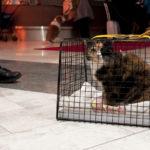 katten Anastasia 14 år