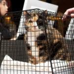 Katten Anastasie 14 år