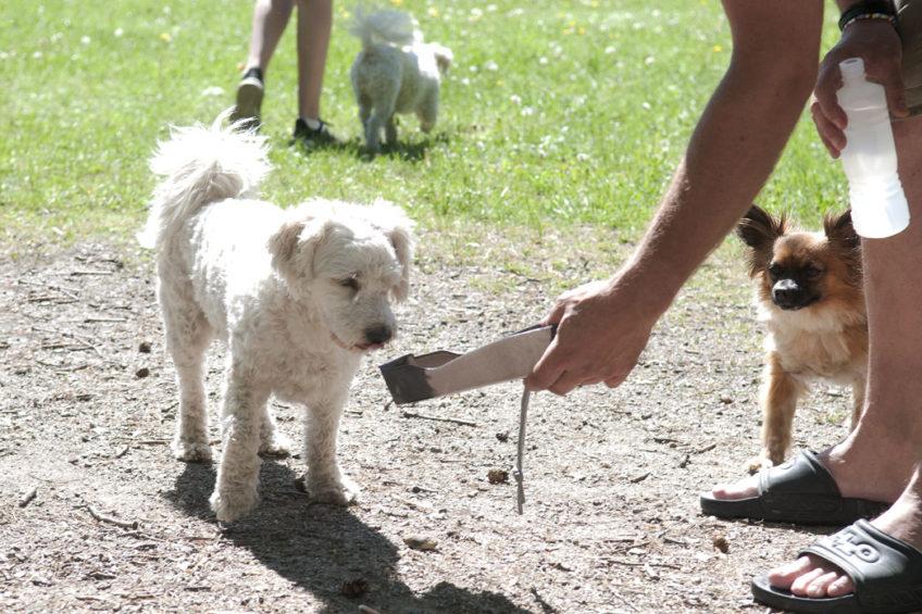 Hundägare i Bredäng brukar träffas varje söndag