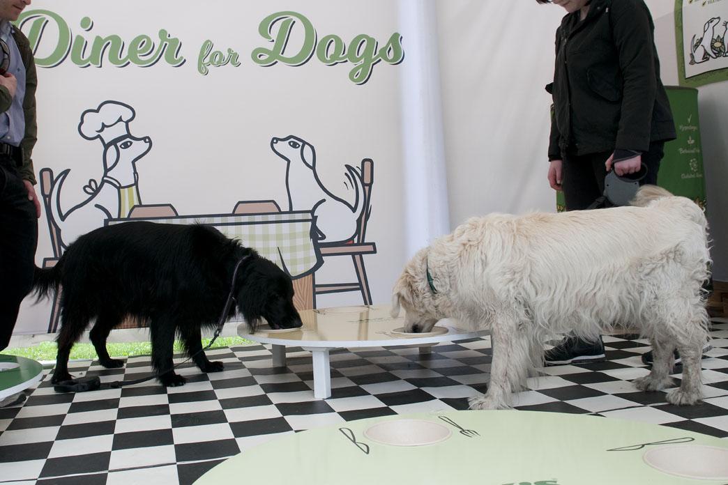 hundlunch i Kungsträdgården