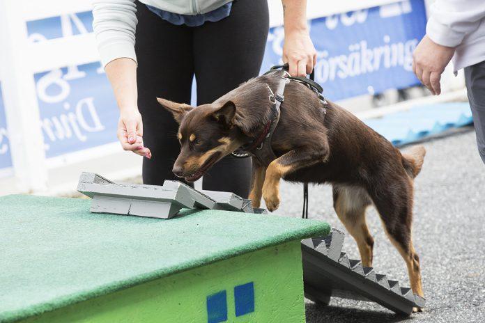 Dog parkour p Djurens helg, Solvalla