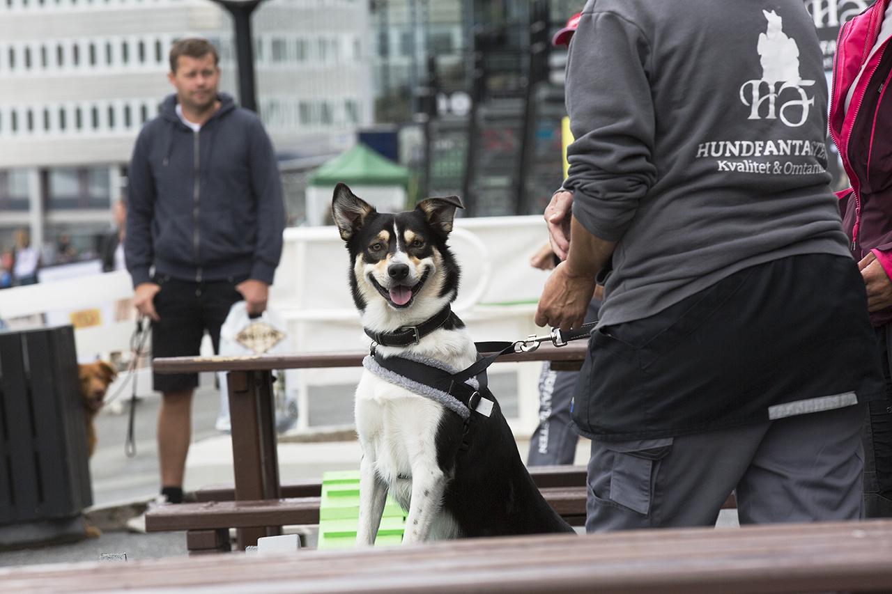 Glad hund efter ha provat på Dog Parkour