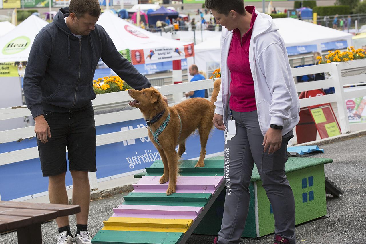 Ung Tollare provar Dog Parkour