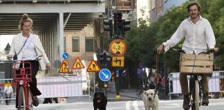 Labradorerna Facit och Wallraff