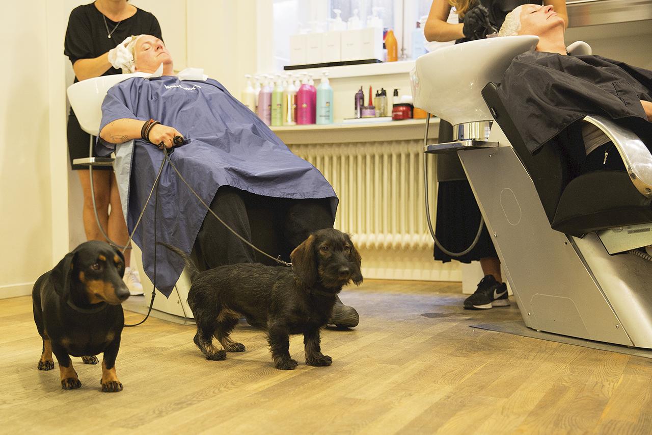 Taxar sköter sig bra på frisörsalong