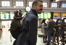 Cosmo i husses ryggsäck för hundar