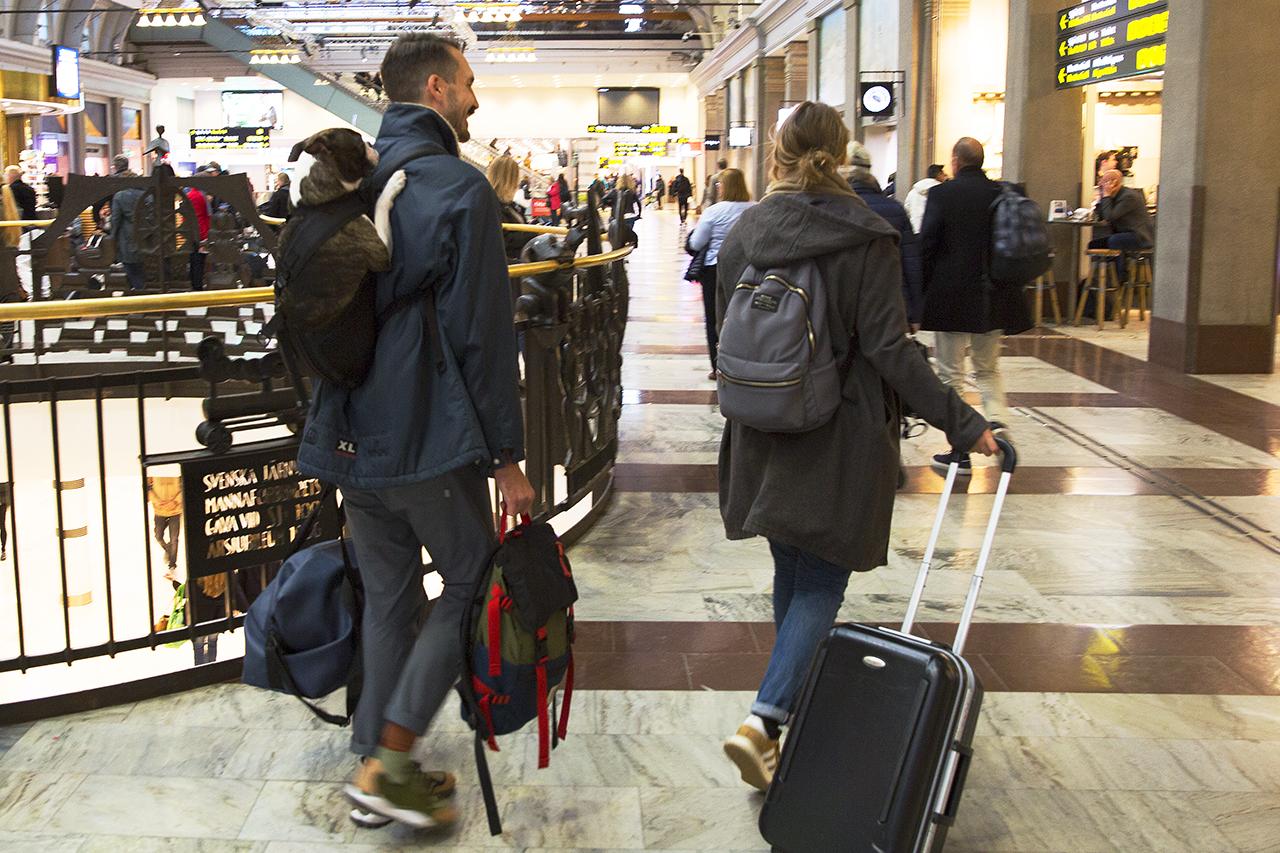 Bostonterrier i ryggsäck på väg till tåget