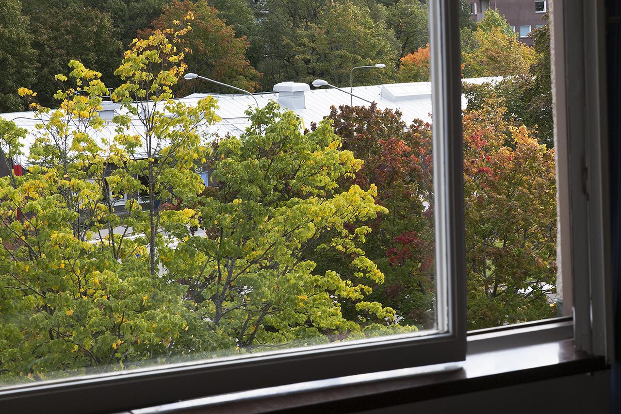 Rent fönster och klara höstfärger.