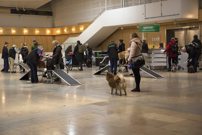 Veterinärbesiktning Hundmässan