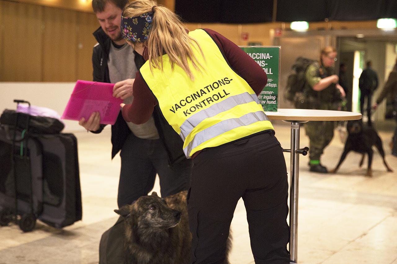 Vaccinations kontroll hund