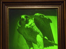 Hologram Falcon poised
