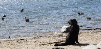 Zezar filosoferar på stranden.
