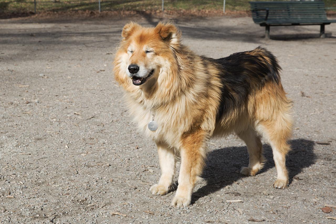 Bravo lapar sol i hundrastgården