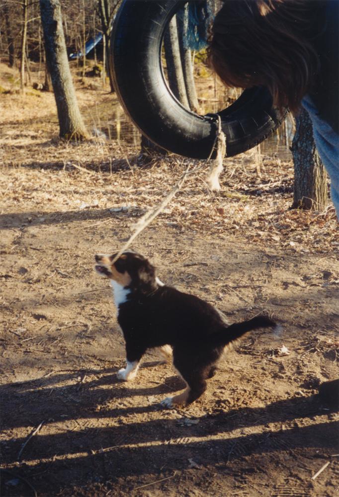 Wilma leker med däck