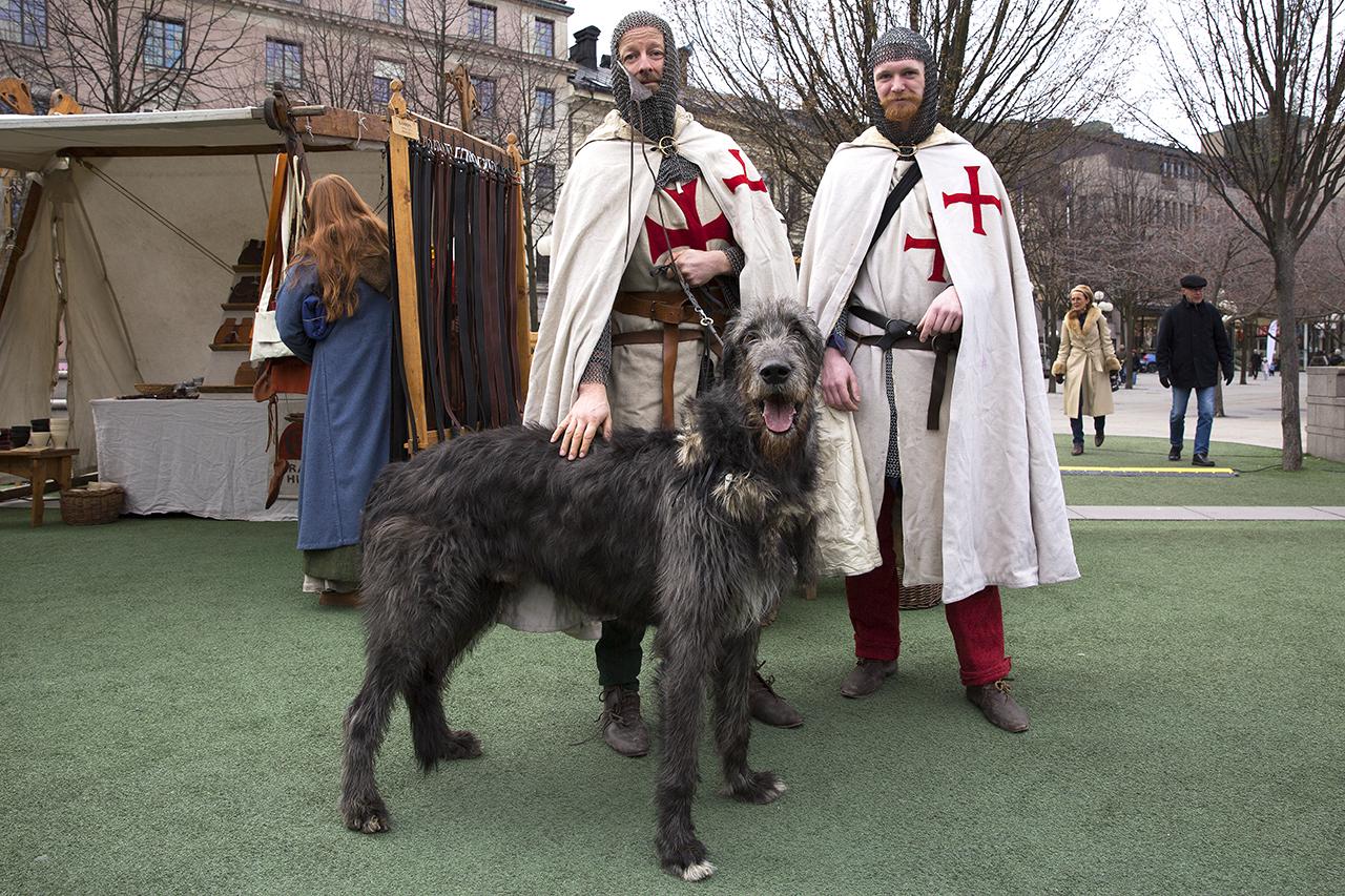 Tempelriddare med Rollo, Irländsk varghund