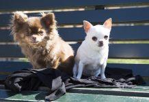 Jolie och Chloe på parkbänk i Tegnérlunden