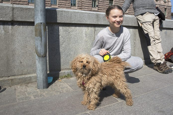 Dvärgpudeln Buster och miljöaktivisten Greta Thunberg
