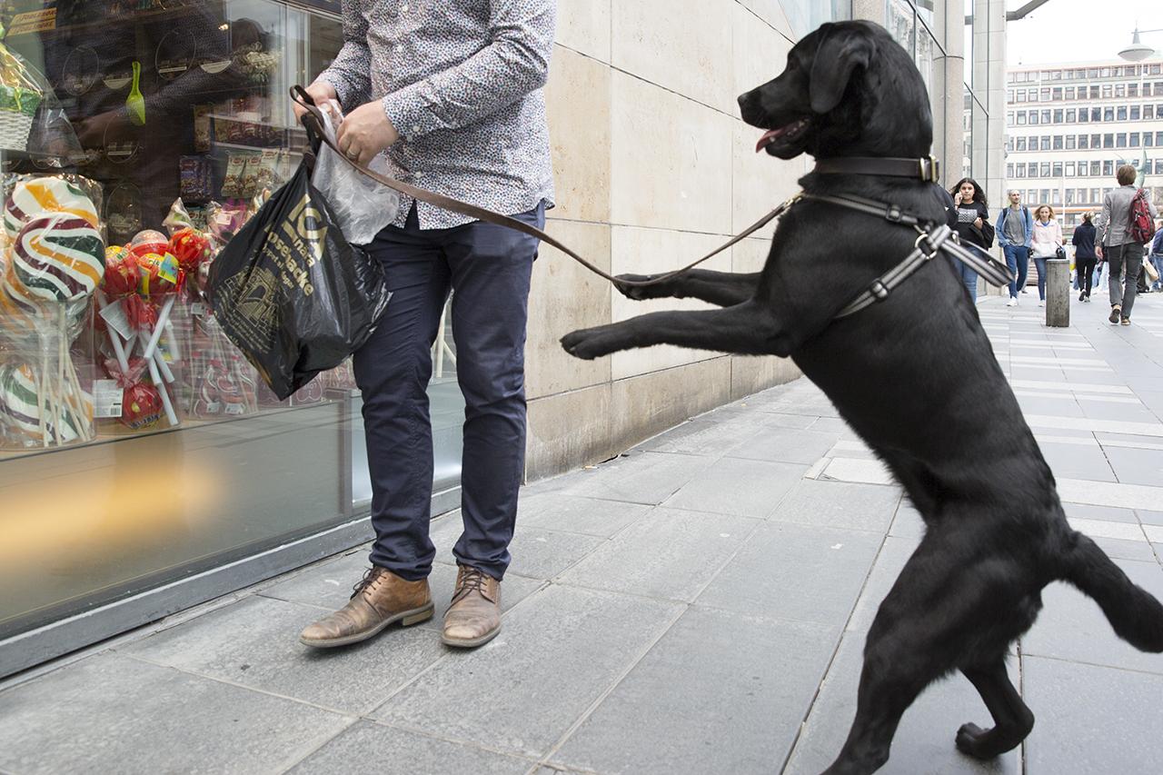 Labradoren Bella står på bakbenen utanför godisbutik.
