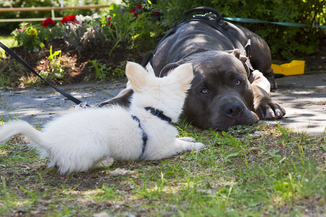 Bailey och Enzo