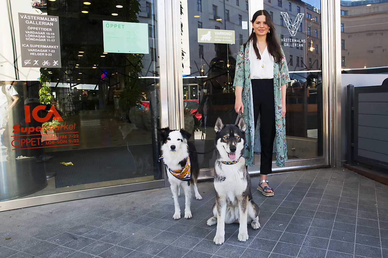 Ayla, Border Collie och Summer, Husky