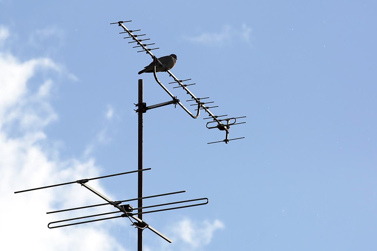 Duva på gammal TV antenn