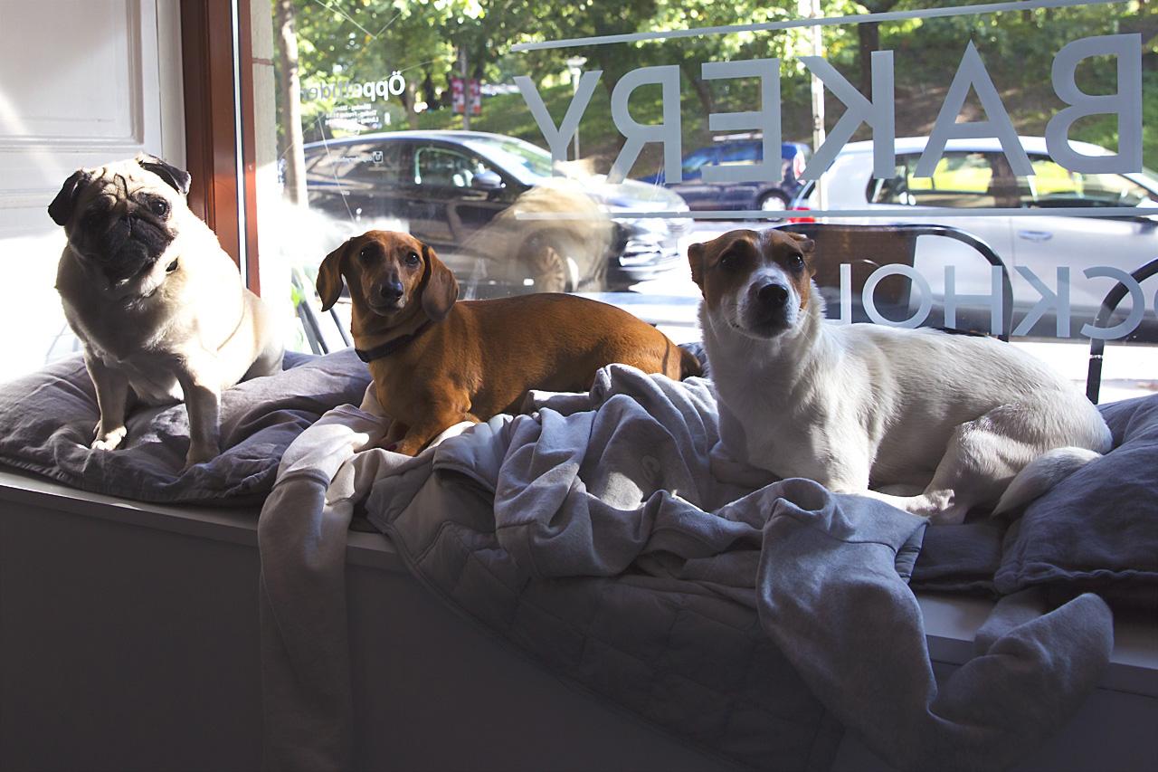 Charlie, Sixten och Lizzie i skyltfönstret Dog Bakery Stockholm