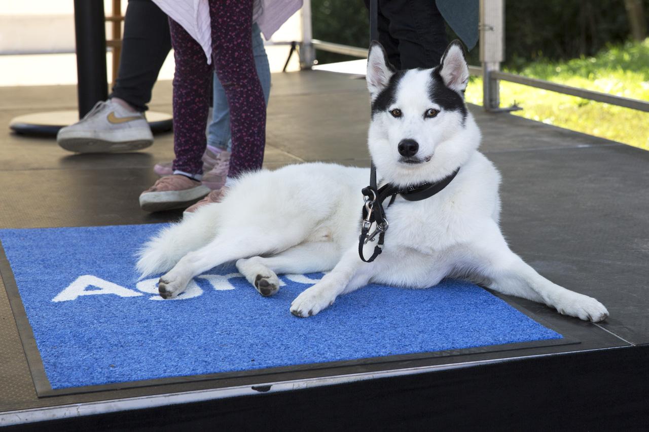 Hero hälsade på hos Hundstallet öppet hus