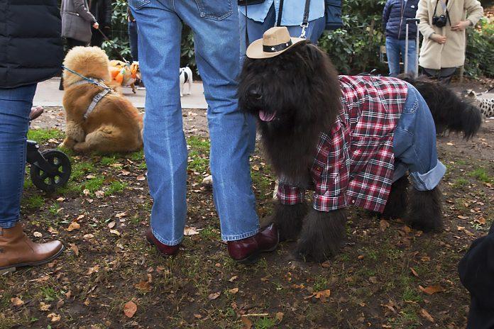 Bearnaise Cowboy