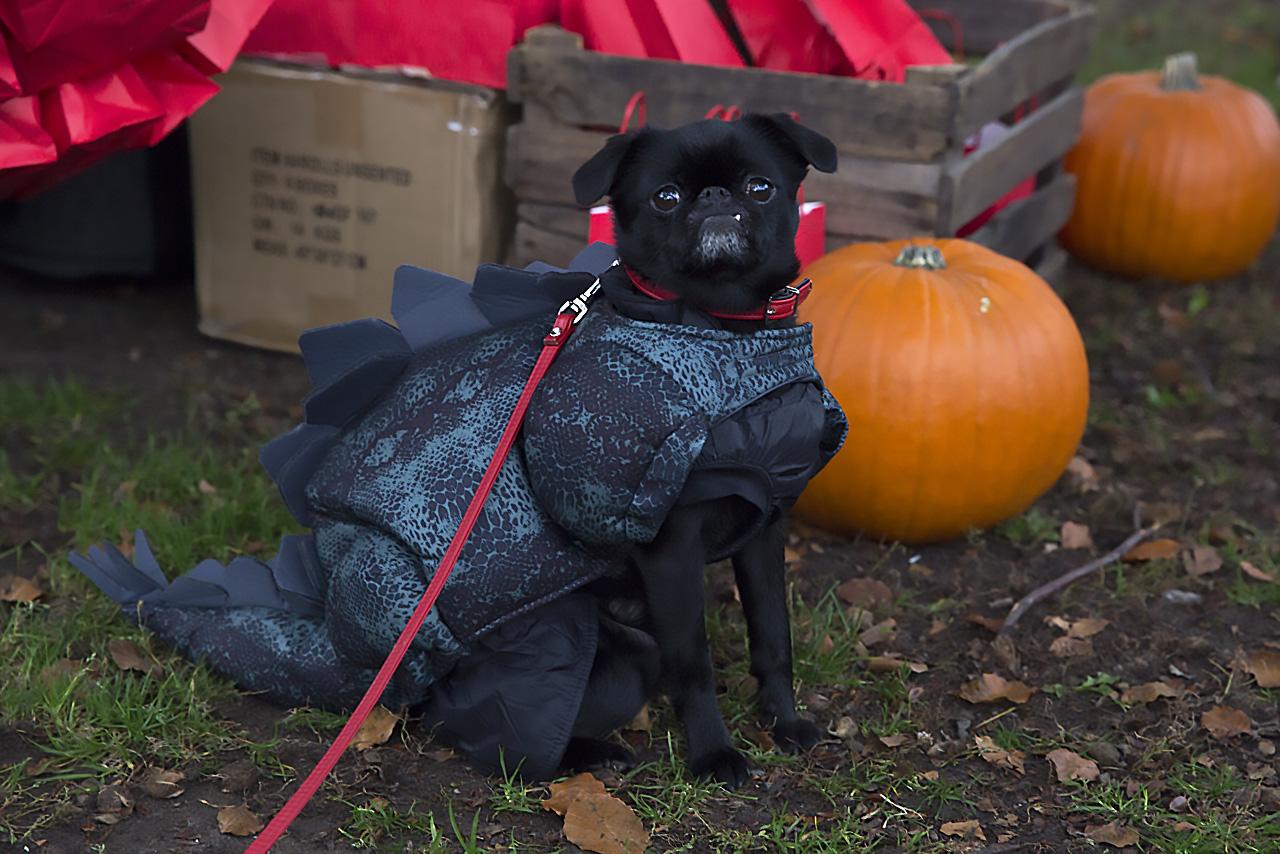 Bill Petit Halloween Hundpromenad Vasaparken