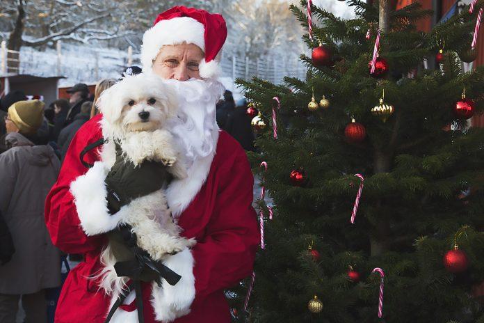 Jultomte Hundstallet julmarknad