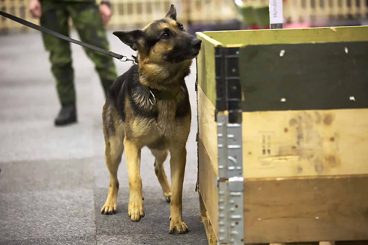 Militärhund söker