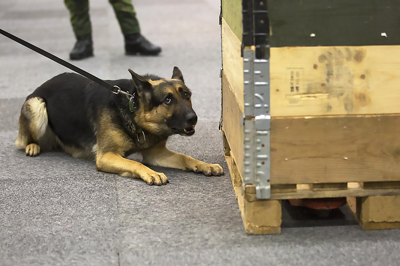 militärhund fyndmarkering