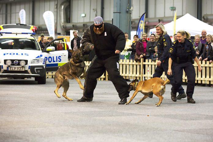 Polis, tull och militärhundar med i uppvisning