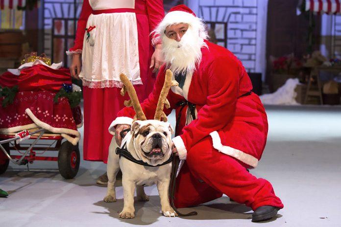 Buldog och Jultomte