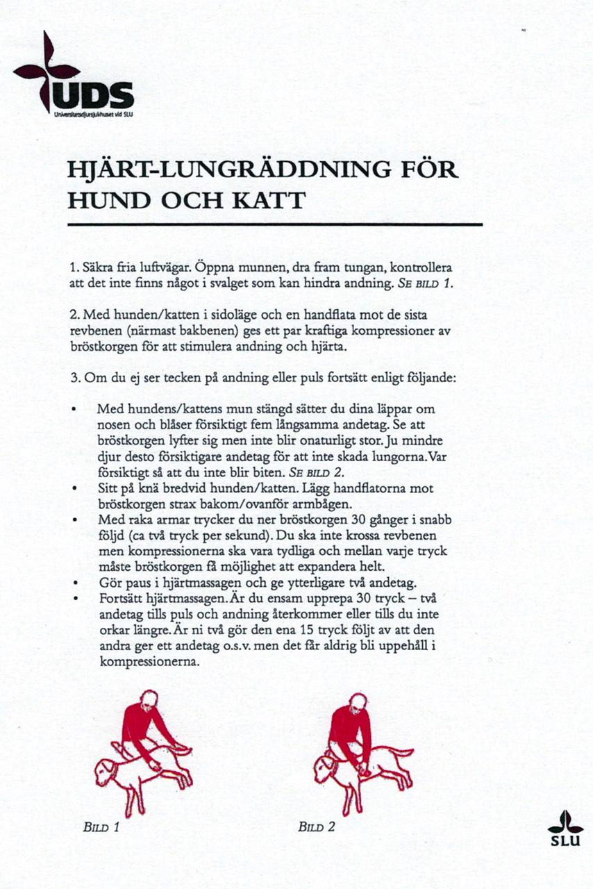 Checklist HLR Hund