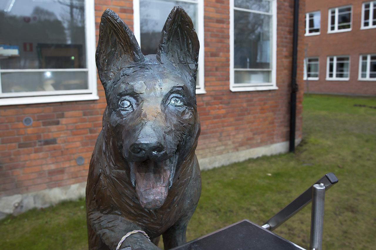 Ansikte hundstaty Tim
