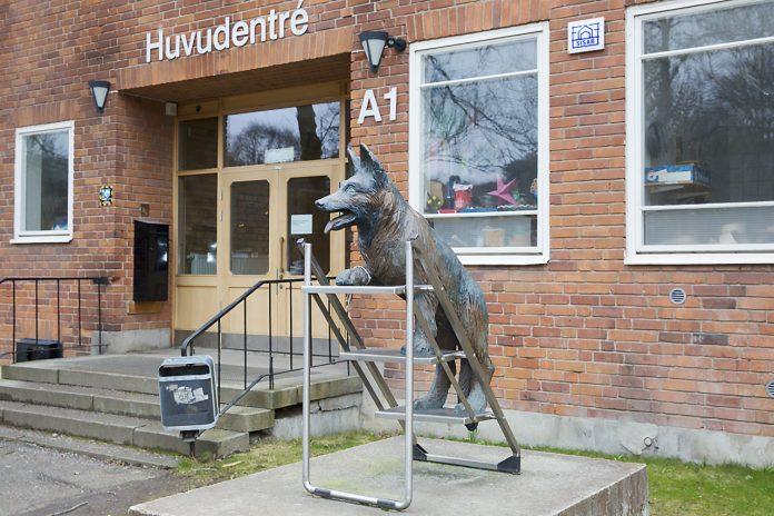 Hundstatyn Tim vakar över Södra Ängbyskolan