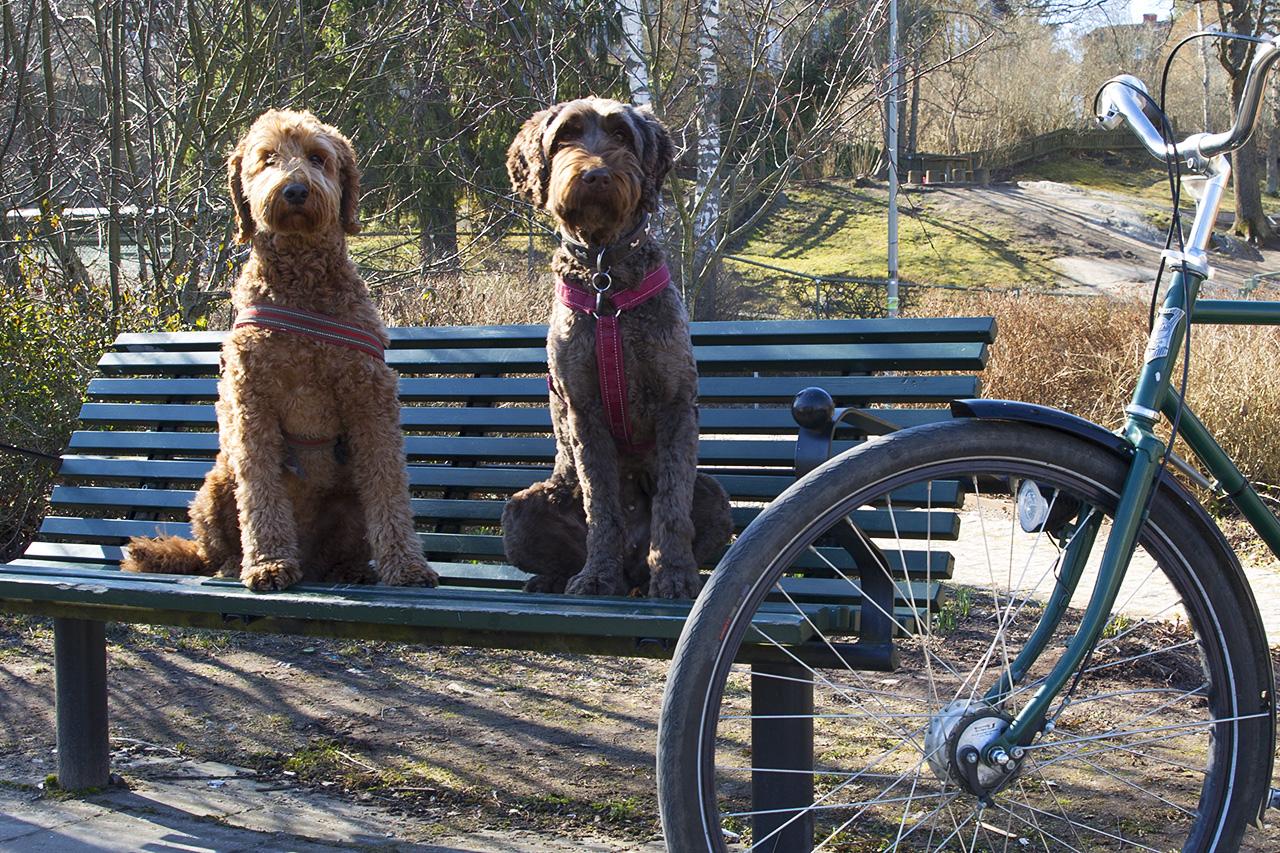 Samson och Dugga vid cykel