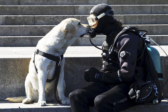 Labradoren Bublik och dykaren Rasmus