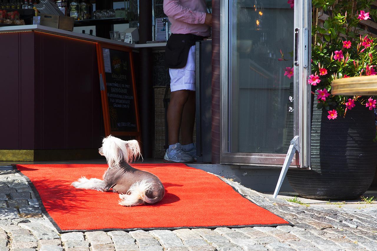 Happy på röda mattan