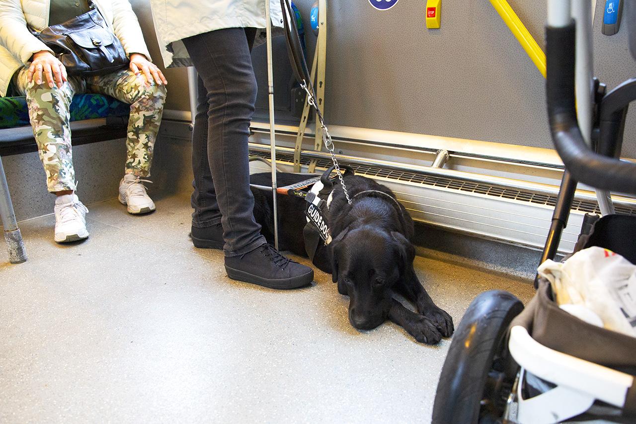 Ledarhunden Emma på buss