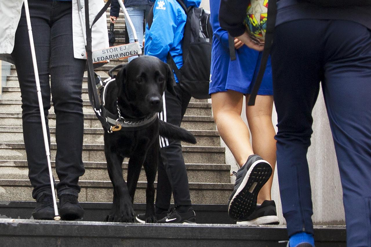 ledarhunden Emma i trappor med ungdomar.
