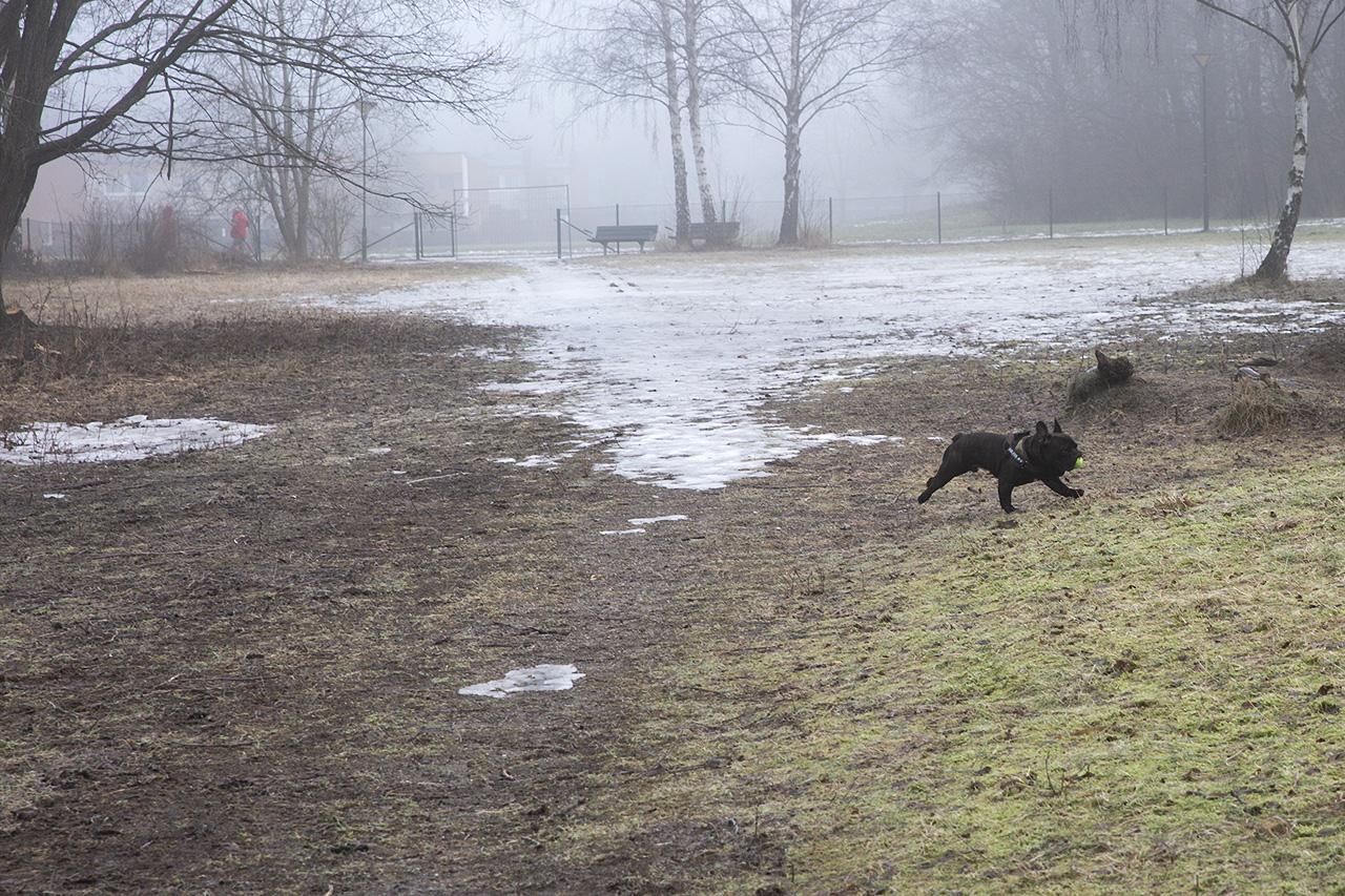 Frallan Baxter i hundpark.